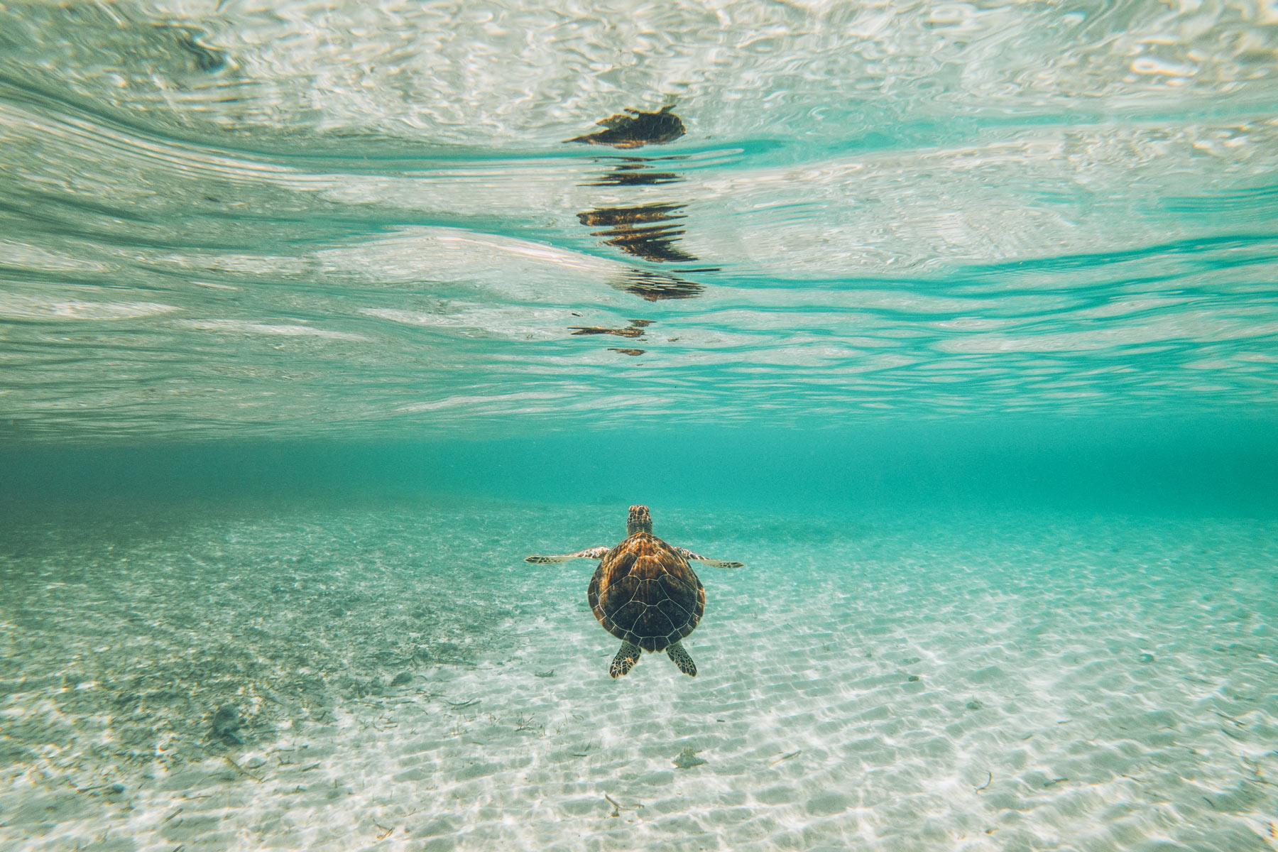 Tortue aux Bahamas, Andros