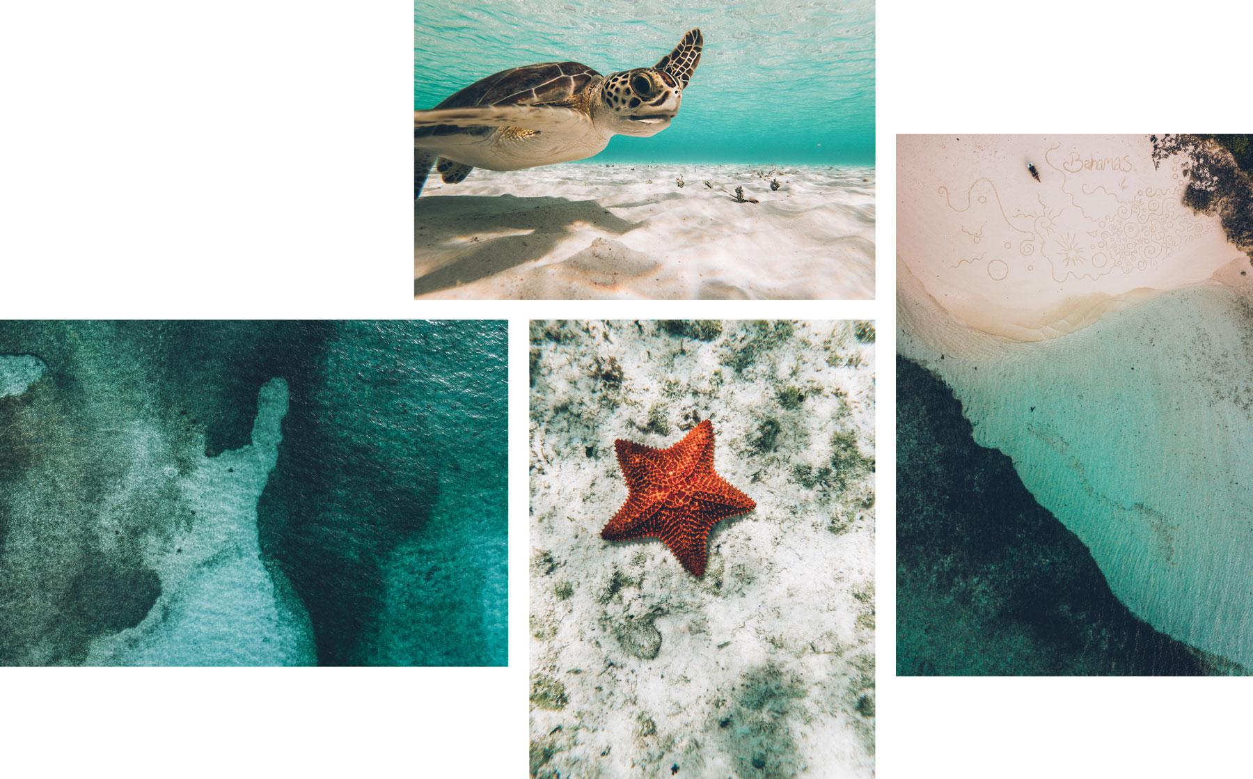 Tortues, Bahamas, Andros