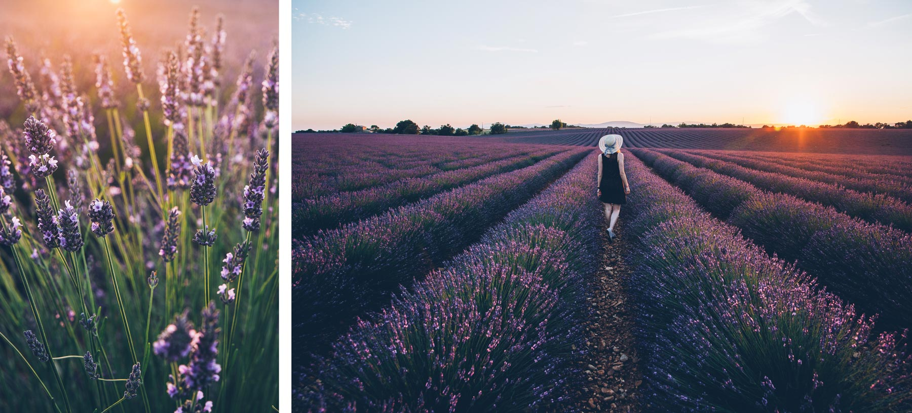 Plateau de Valensole, Provence