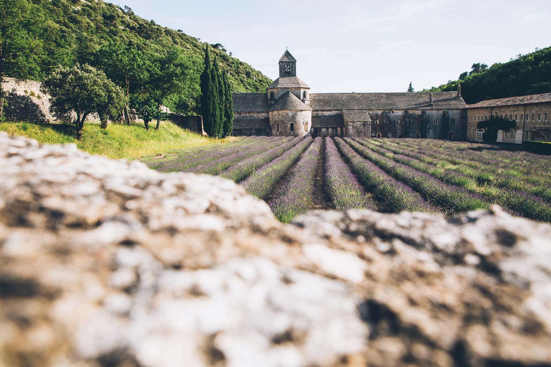 Abbaye de Sénanque, Lavande