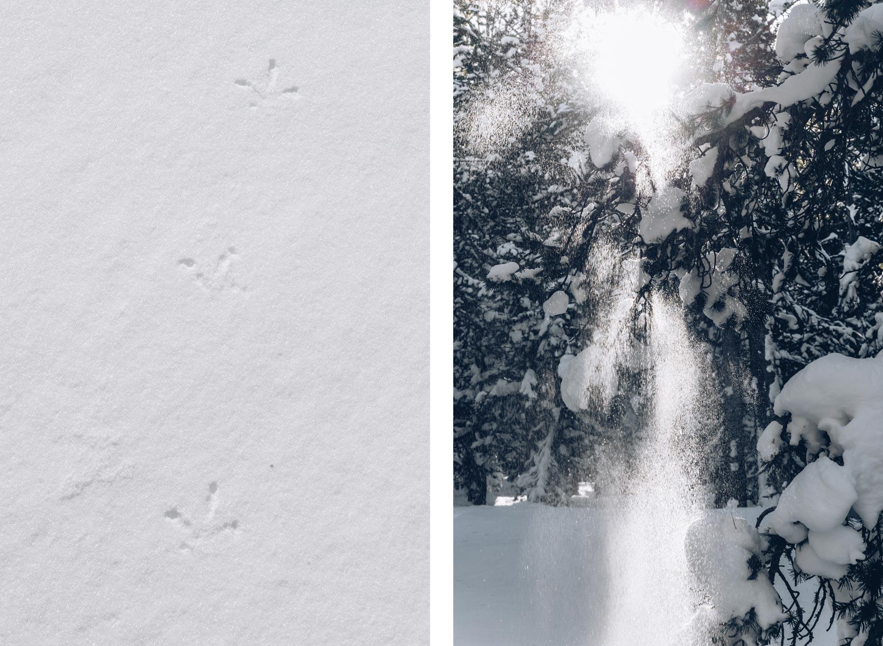 sur les traces du lagopede alpin