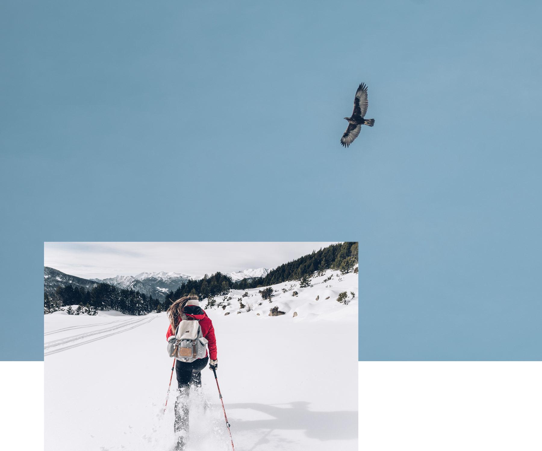 Aigle royale, Andorre