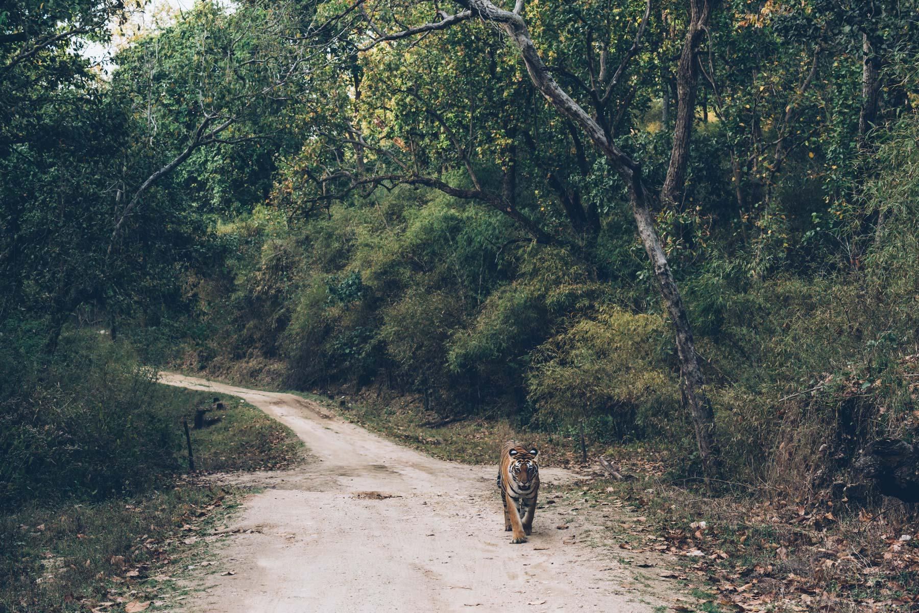 Tigre en Inde, Blog Voyage