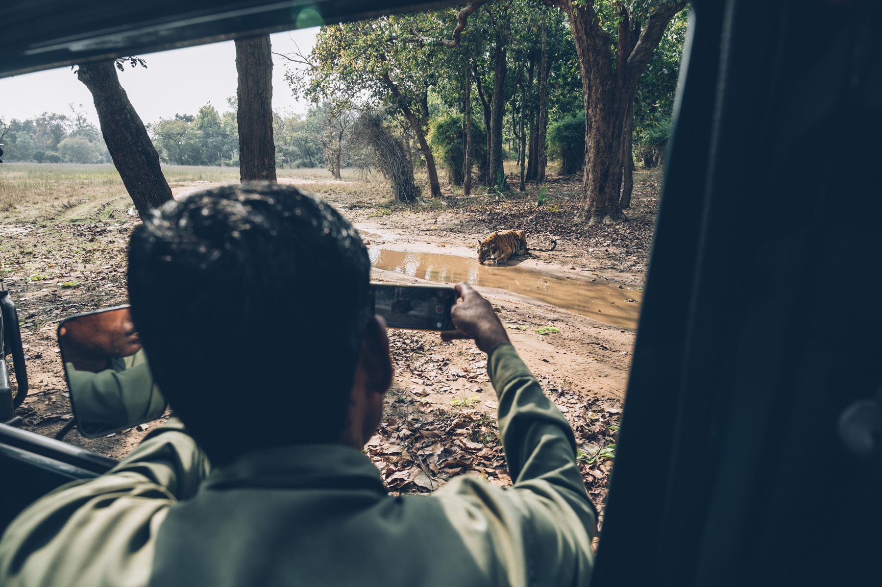 Safari tigre en Inde
