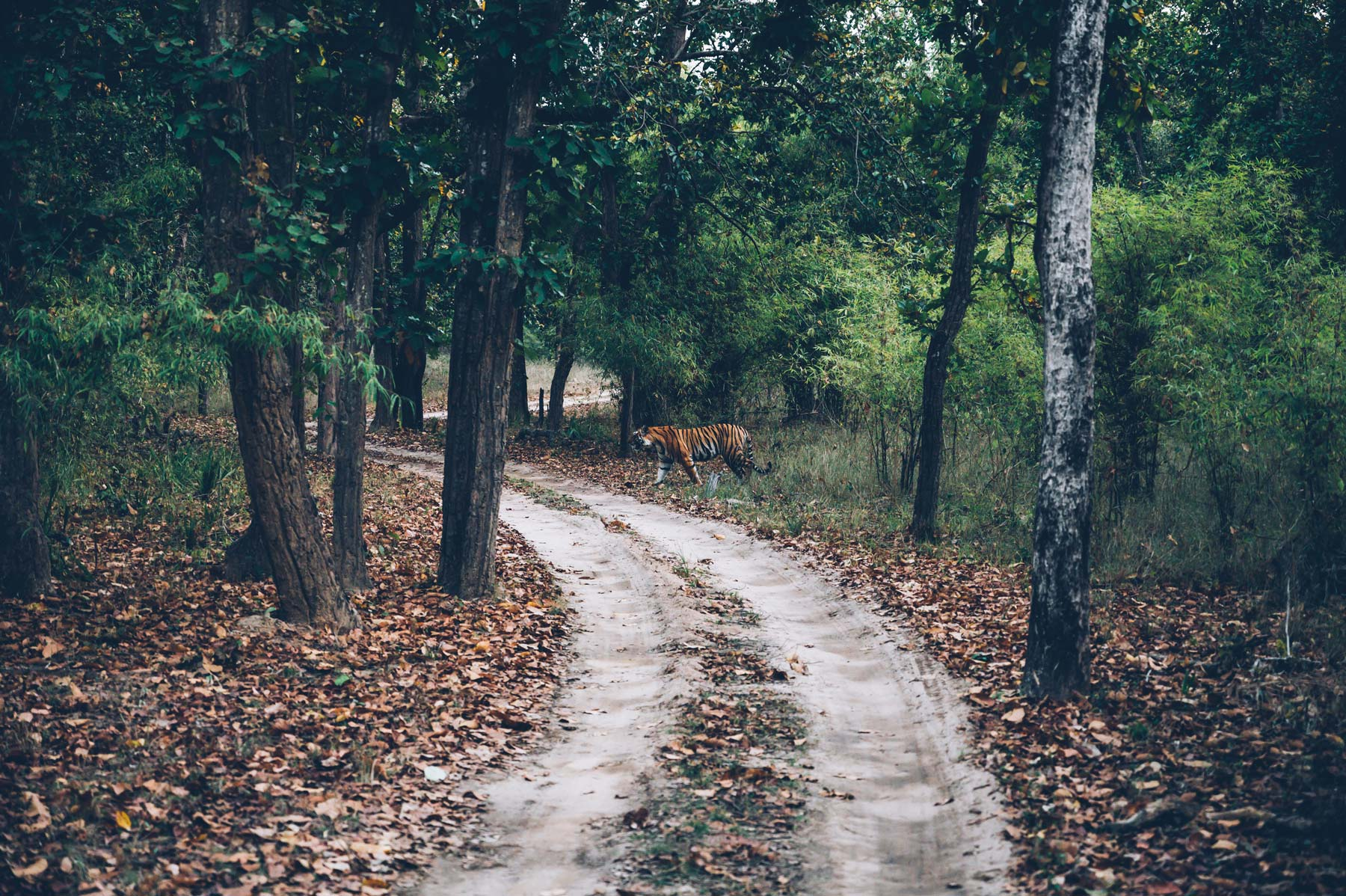 Bandhavgarh, Parc National