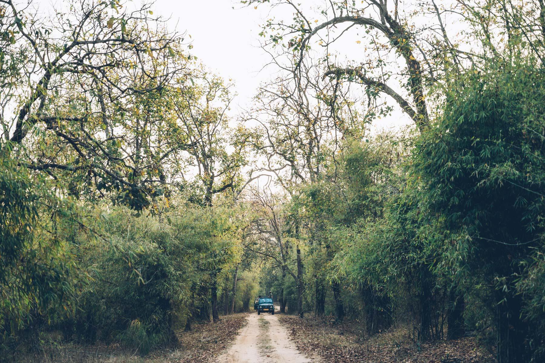 Bandhavgarh, réserve Naturelle en Inde