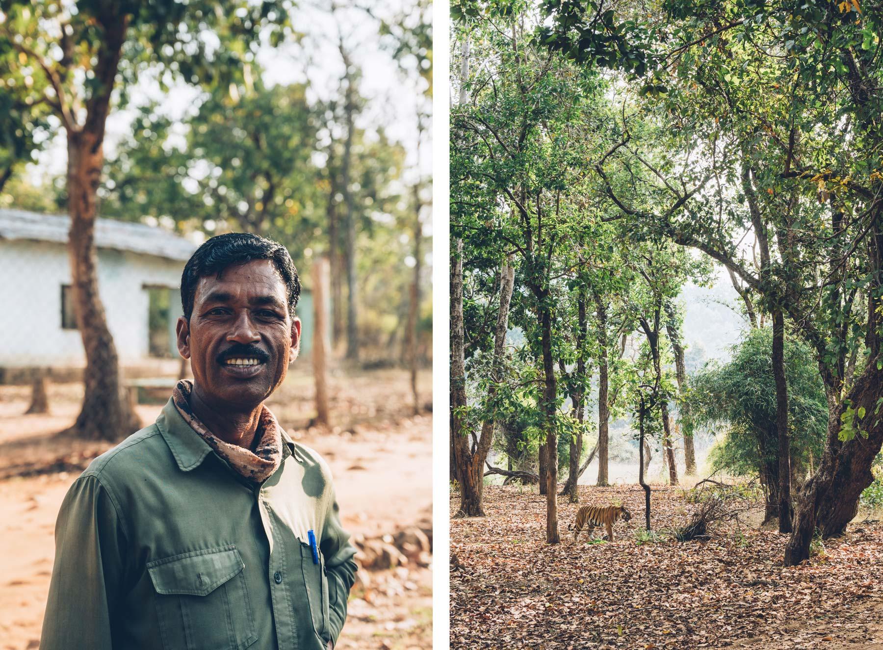 Tiger reserve en Inde, Bandhavgarh