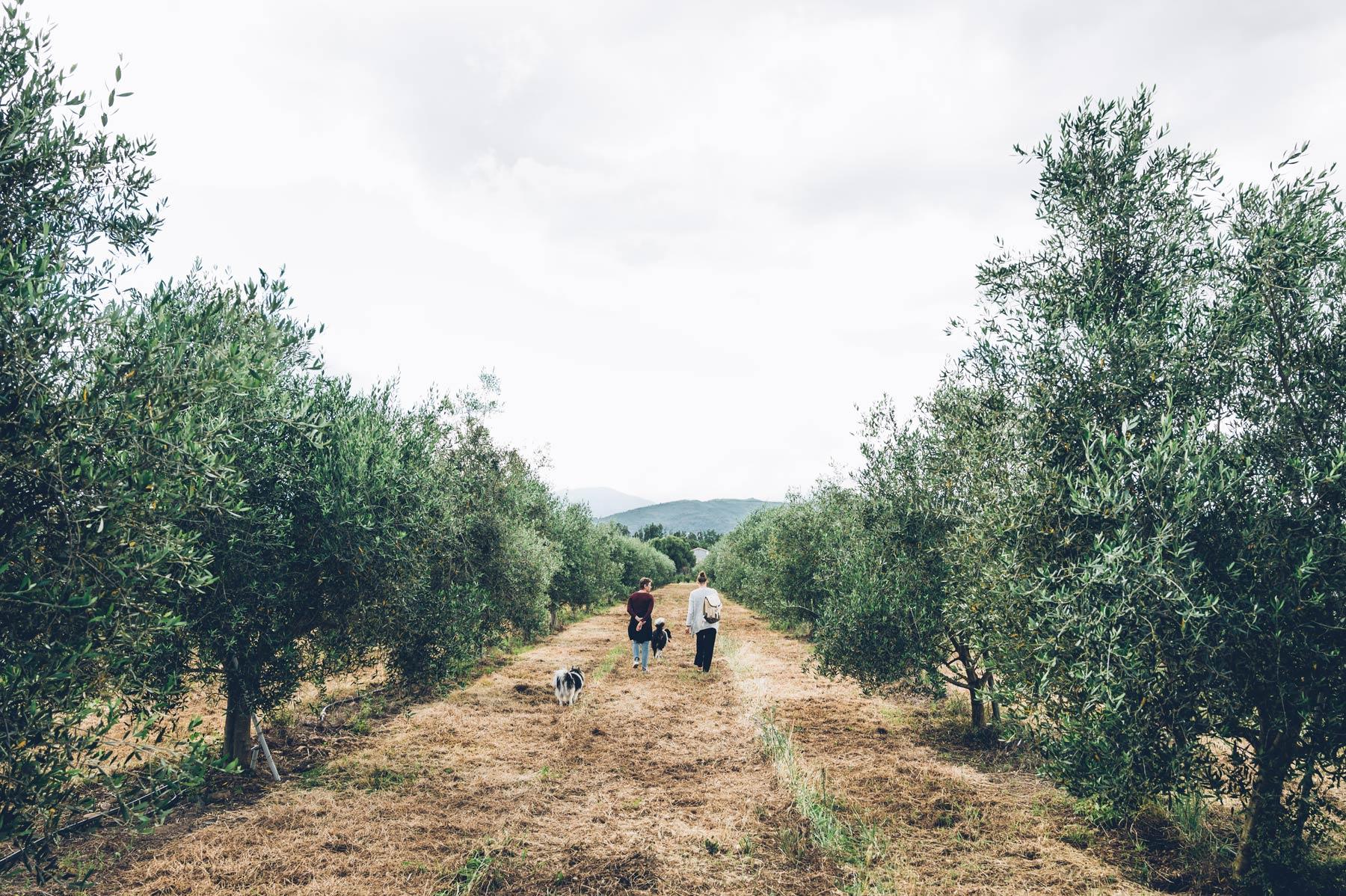 Domaine Marquiliani, Corse