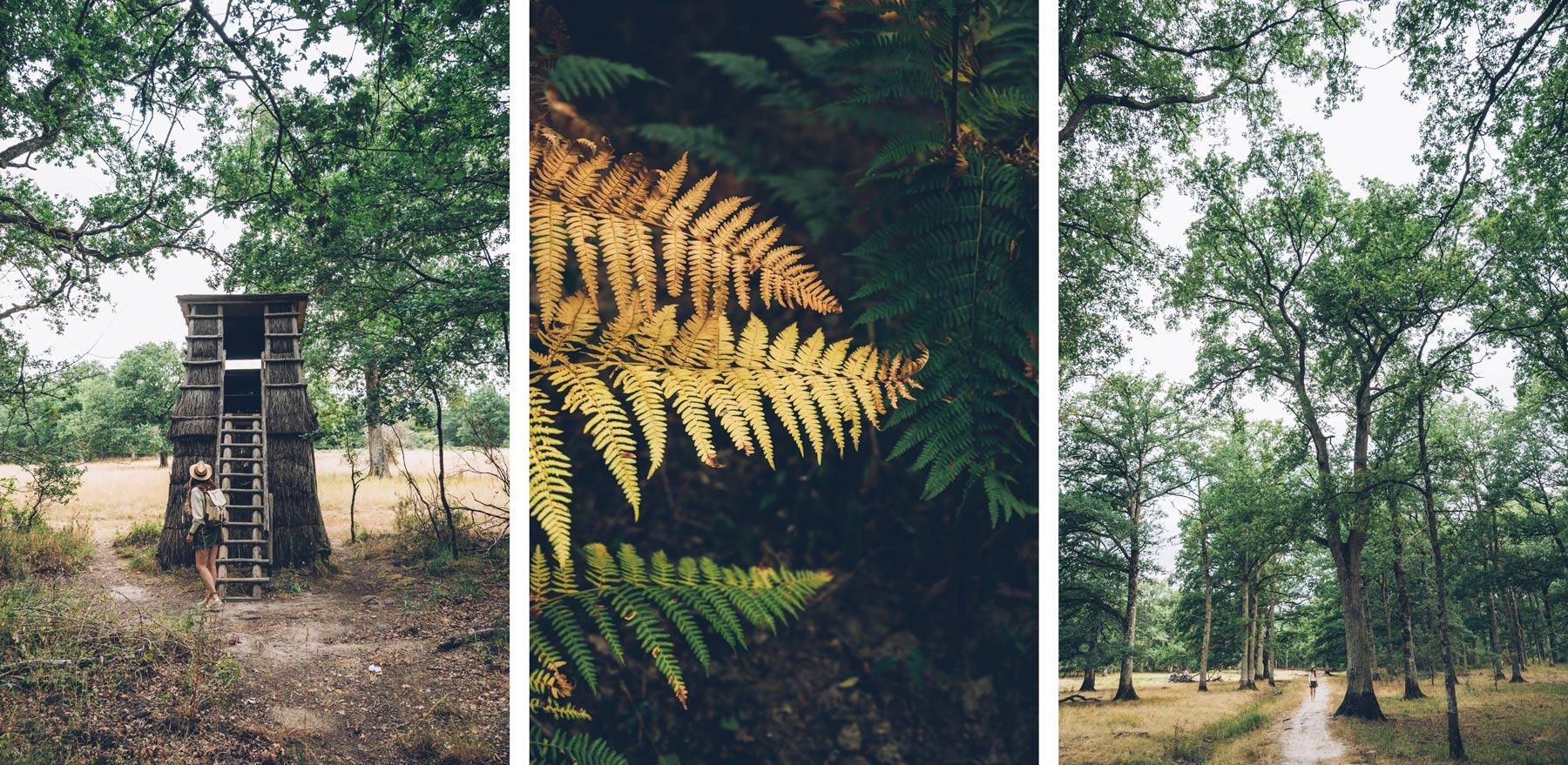 Forêt de Chambord