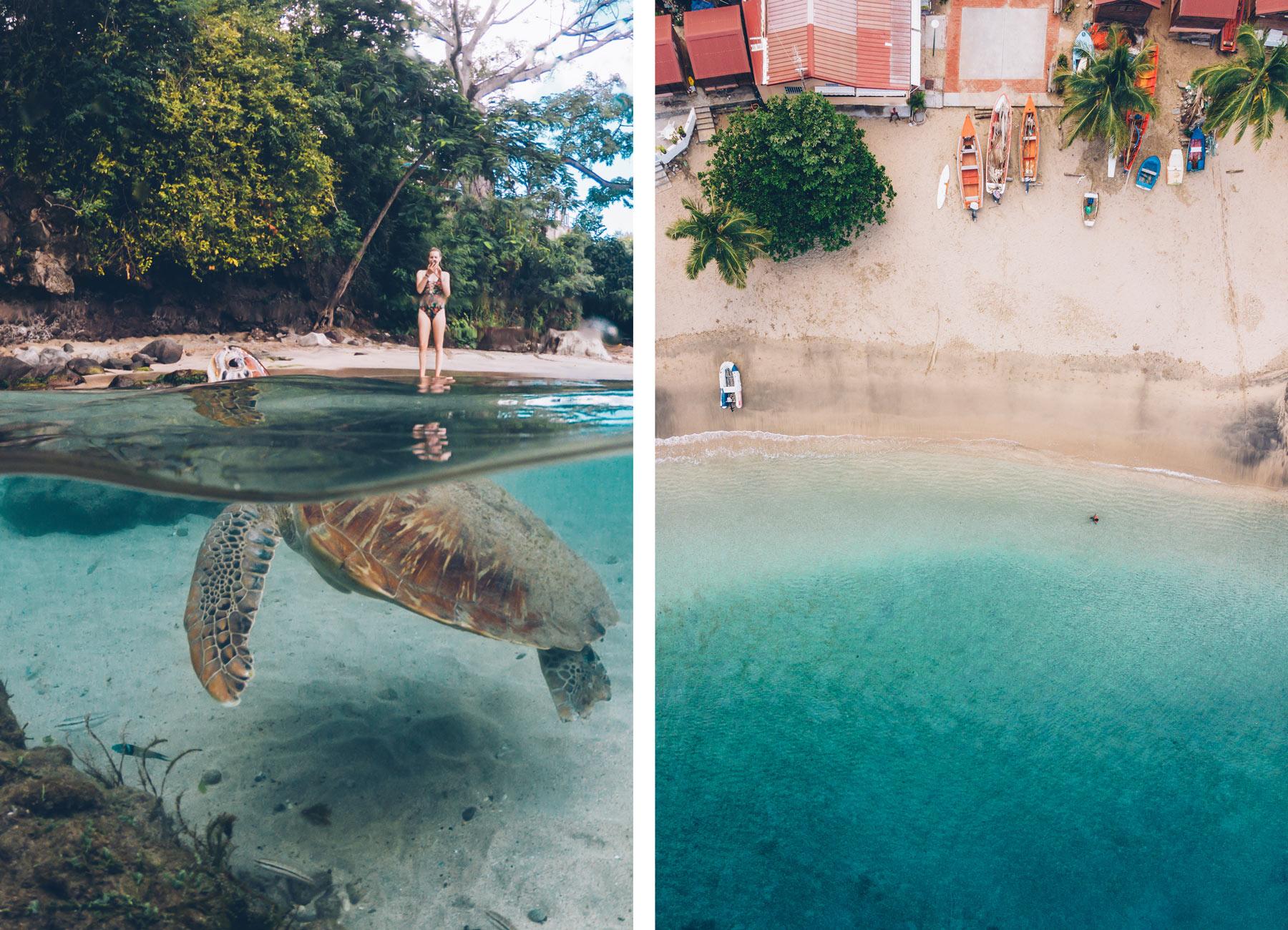 ou voir les tortues en Martinique? Anse Dufour