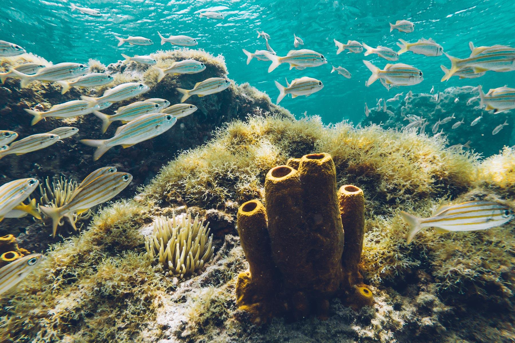 Spot Snorkeling en Martinique: Anse d'Arlet