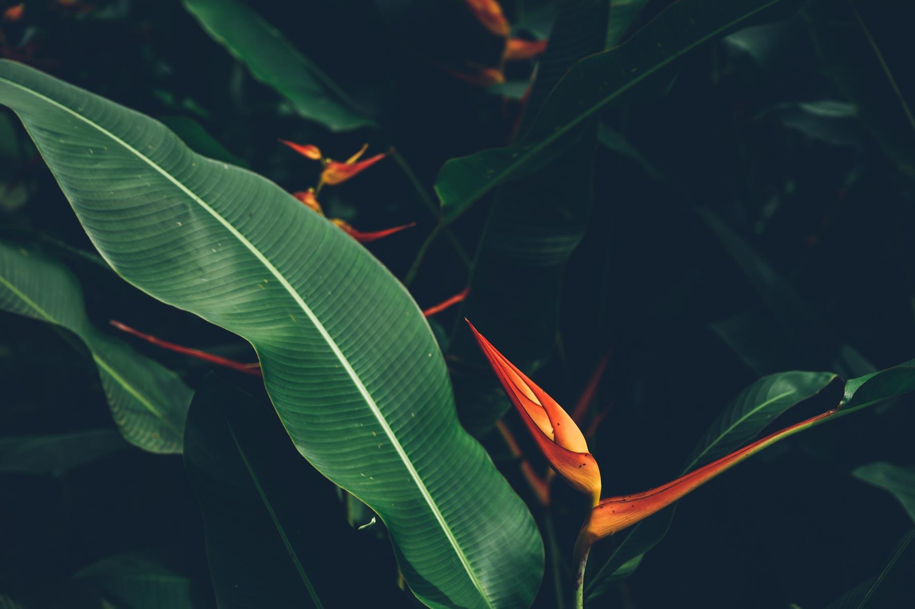 Martinique, l'ile aux fleurs