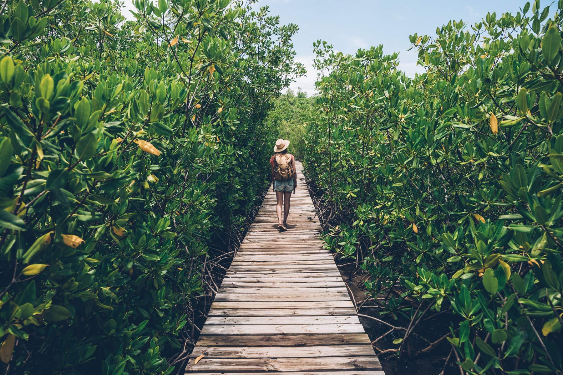 Mangrove, La Caravelle, Martinique