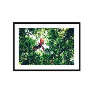 Tirage photo Aras Rouge