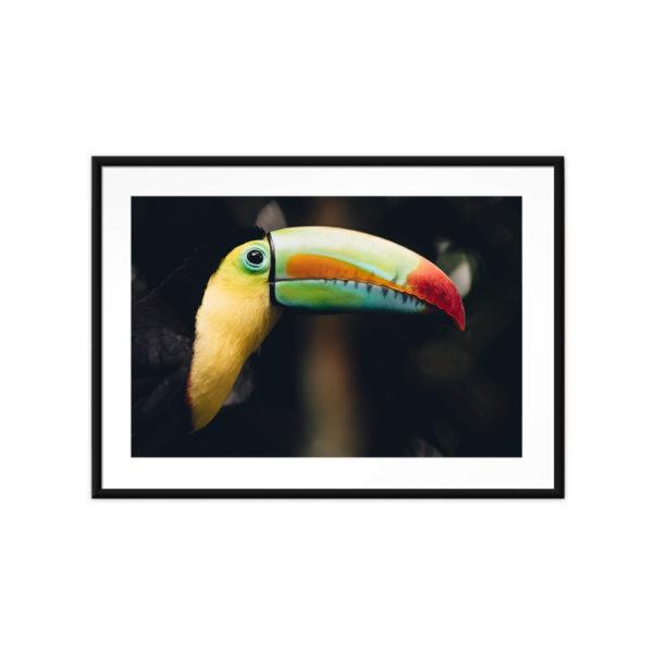 Tirage photo, Toucan