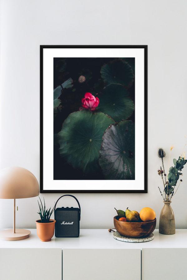 Tirage d'art, Lotus Rose