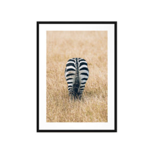 Tirage Photo, Zebra
