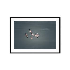 Tirage photo, Pink Flamingoes