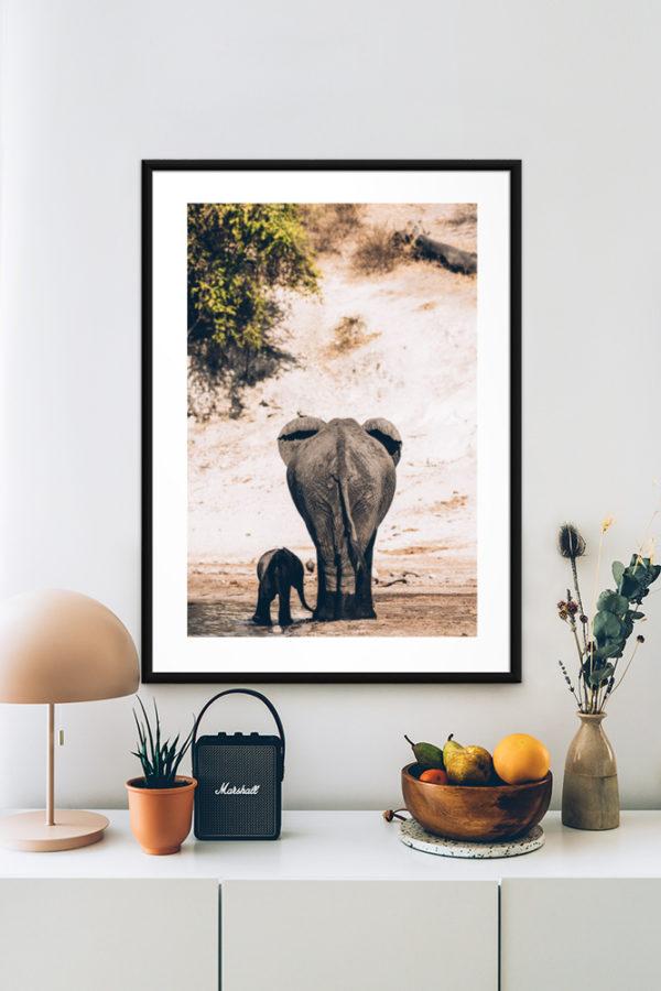 Tirage d'art, Eléphants