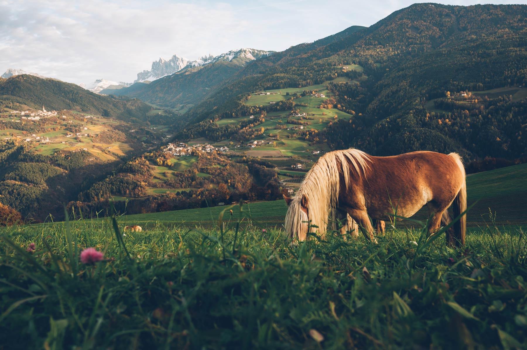 Le sentier des châtaignes, Sud Tyrol