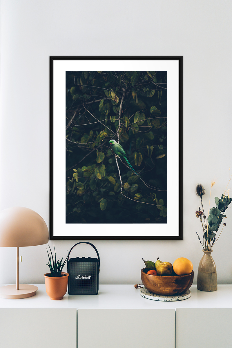 Green Parrot Poster Photo