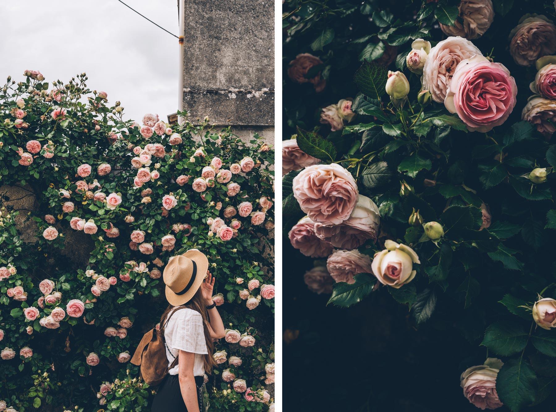 Les Roses de Fontevraud
