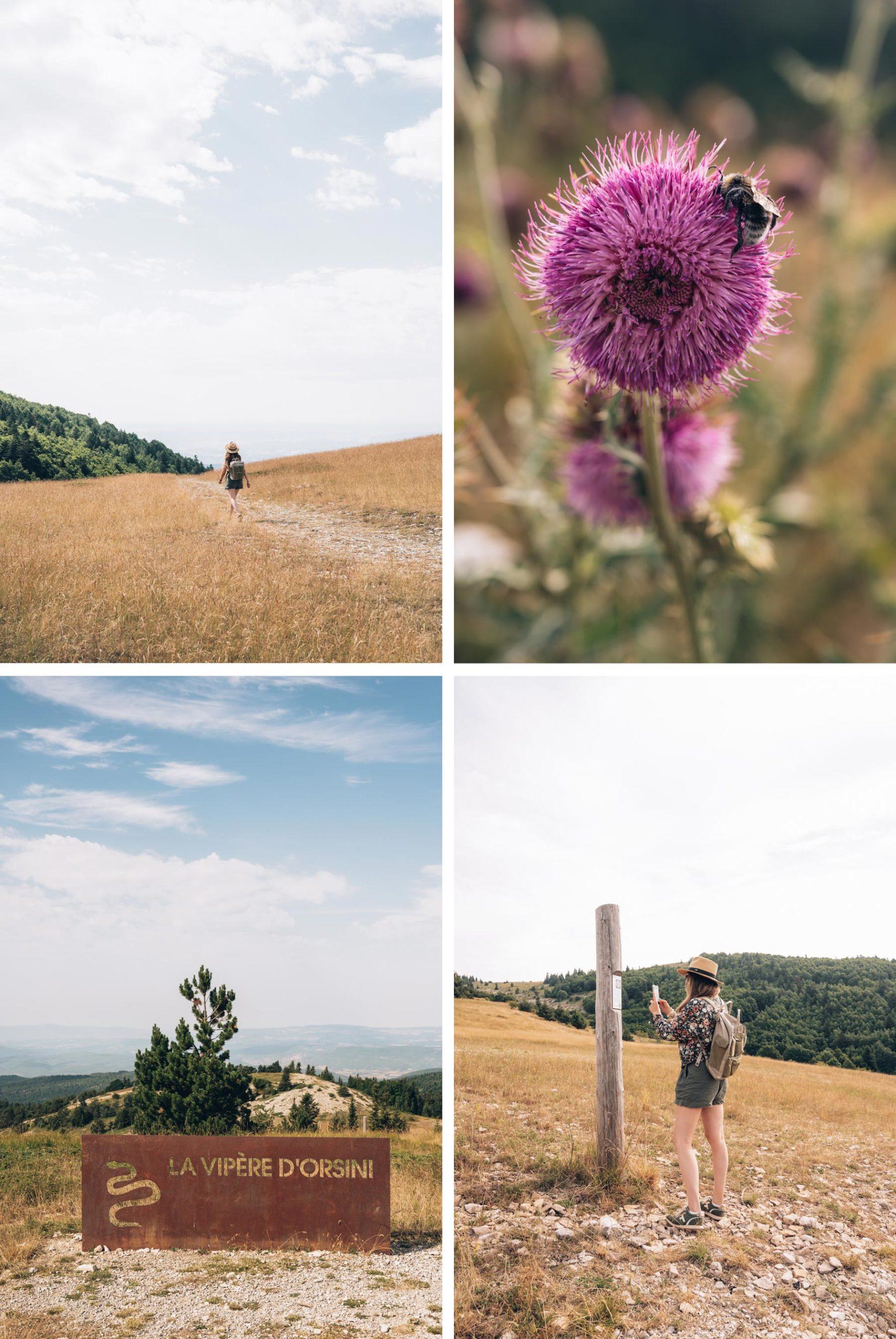 Montagne de Lure, Alpes de Haute Provence