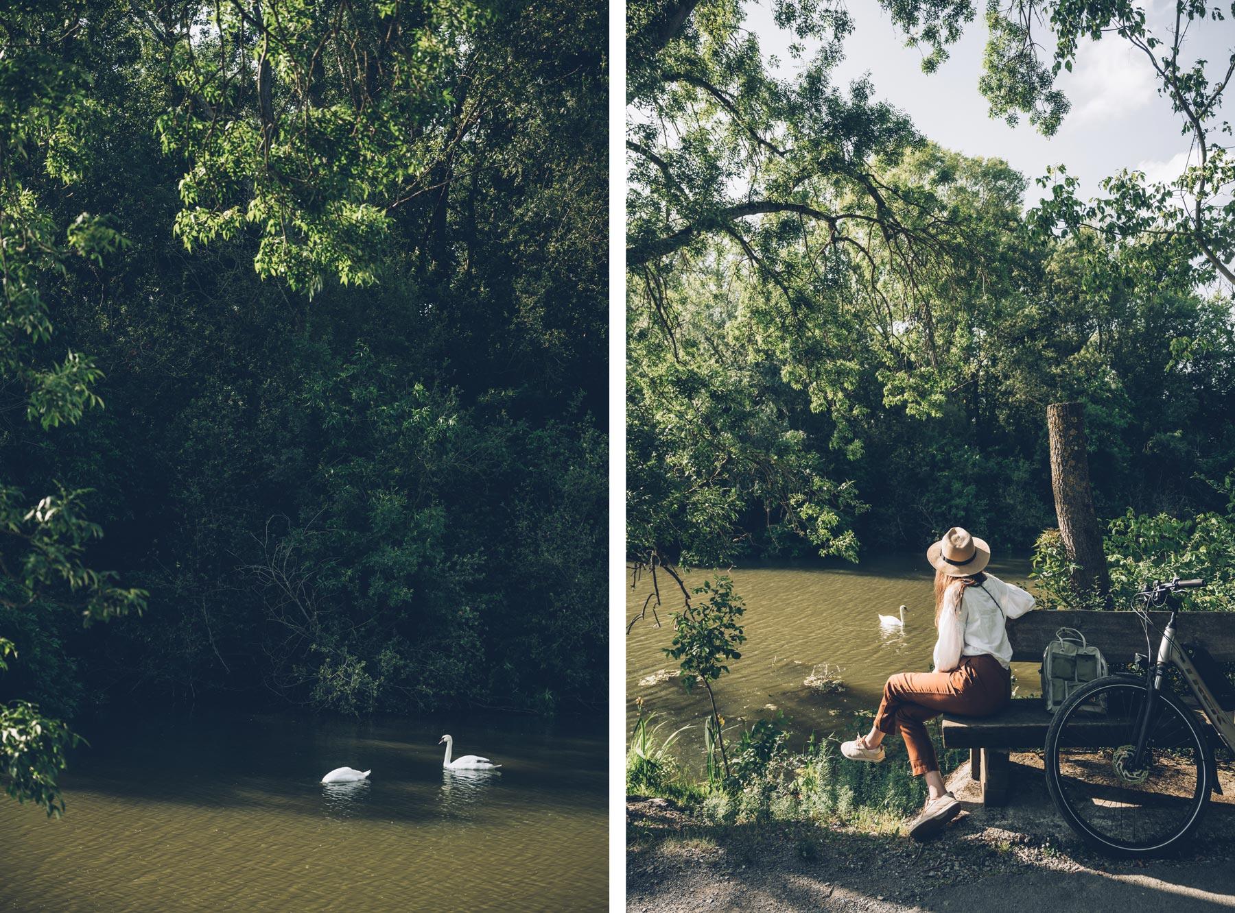 Nature près d'Angers