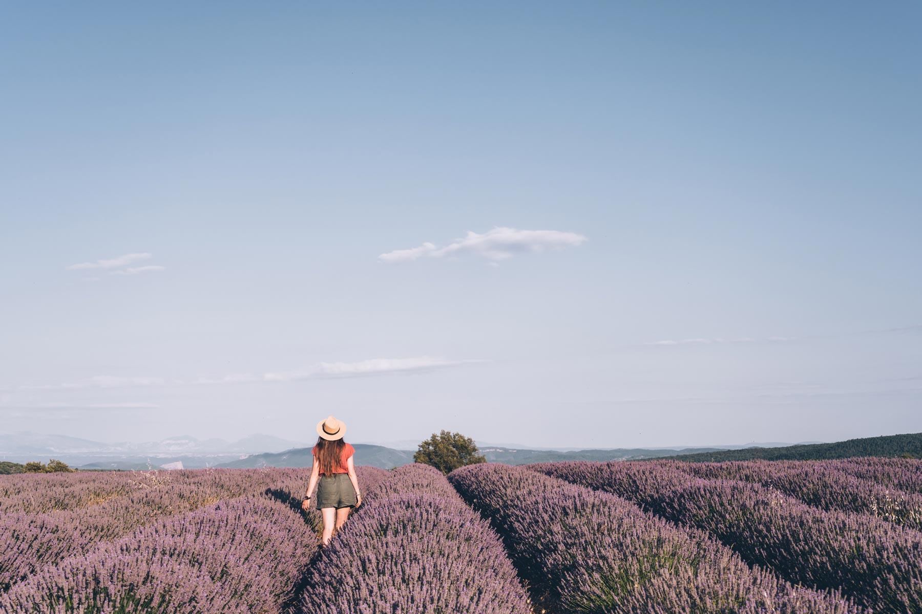 Lavande, Alpes de Haute Provence